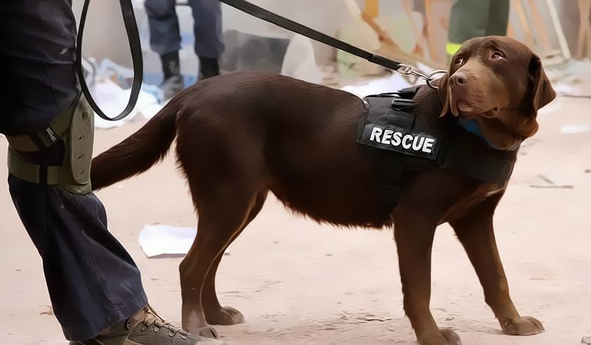 Lola, la perra que salvó a nueve personas en Haití